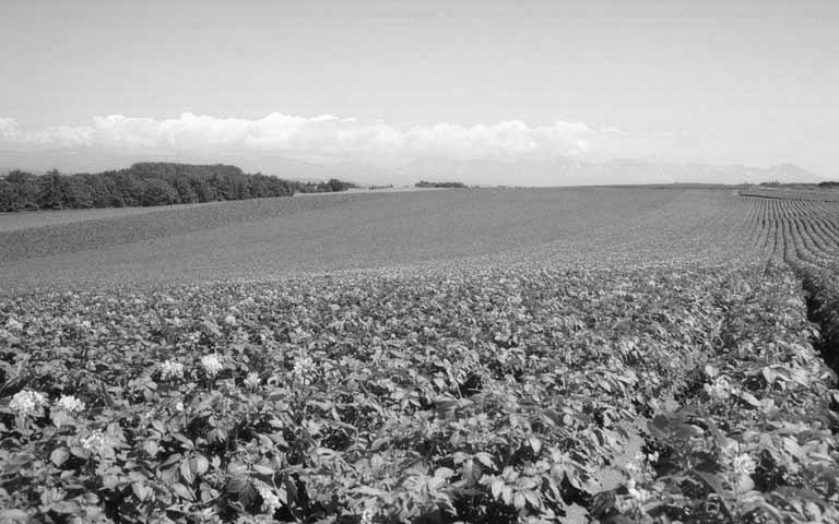 potato_field_greyscale